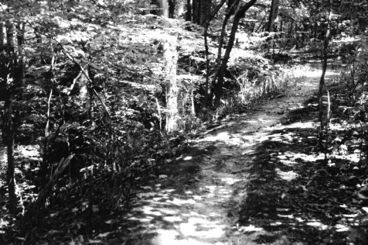 Path by artisticotis