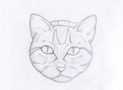 Photorealistic cat (without mustache) by Mich-C