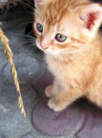 baby cat. baby cat. baby cat. by oh-what