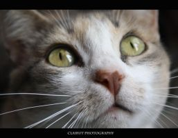 Cat's eyes by ClairutPhotography